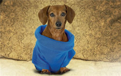 snuggie_for_dogs